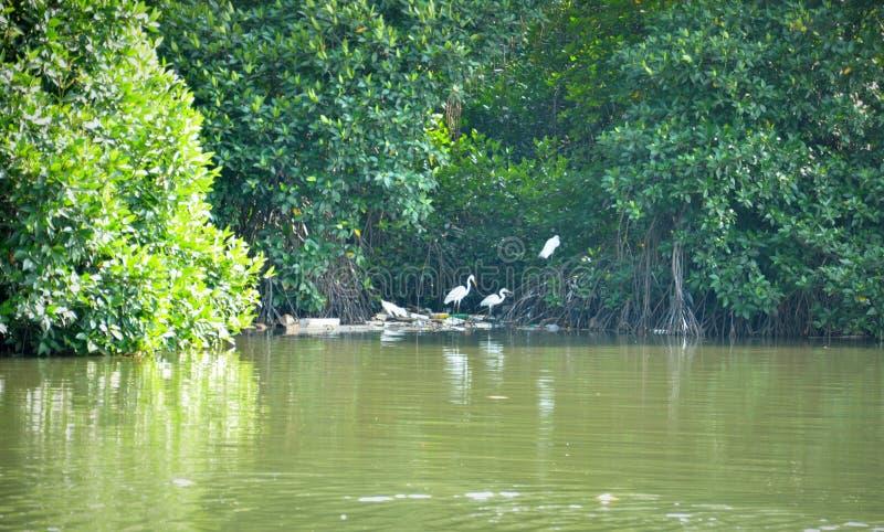 Lagoa de Negombo em Sri Lanka imagem de stock