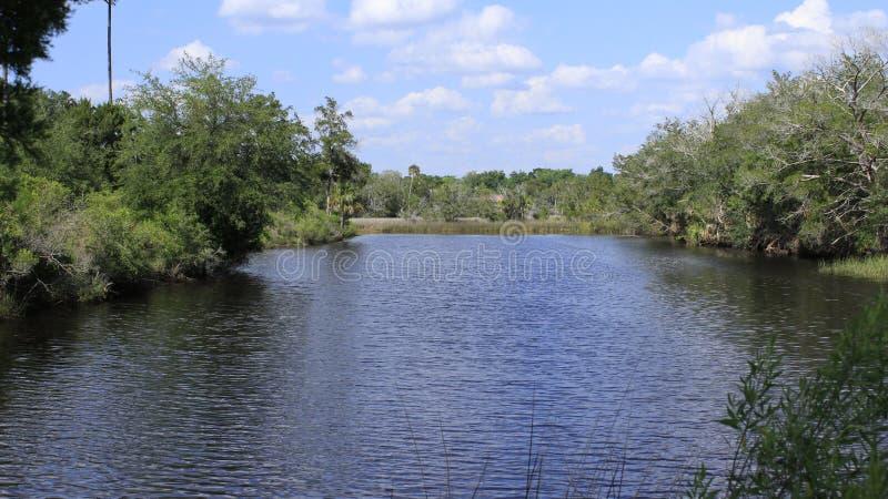 Lagoa de peixes fotografia de stock royalty free