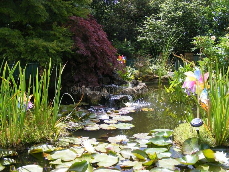 Lagoa de peixes do jardim com lírios de lagoa foto de stock royalty free