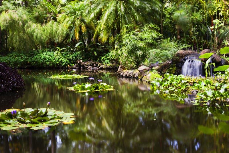 Lagoa de peixes do ouro no jardim botânico tropical de Havaí imagens de stock royalty free