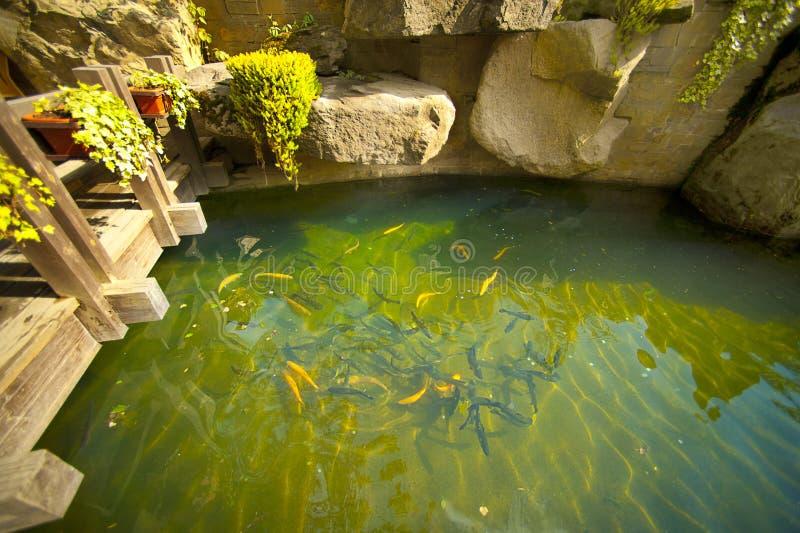 Lagoa de peixes no jardim japonês fotos de stock