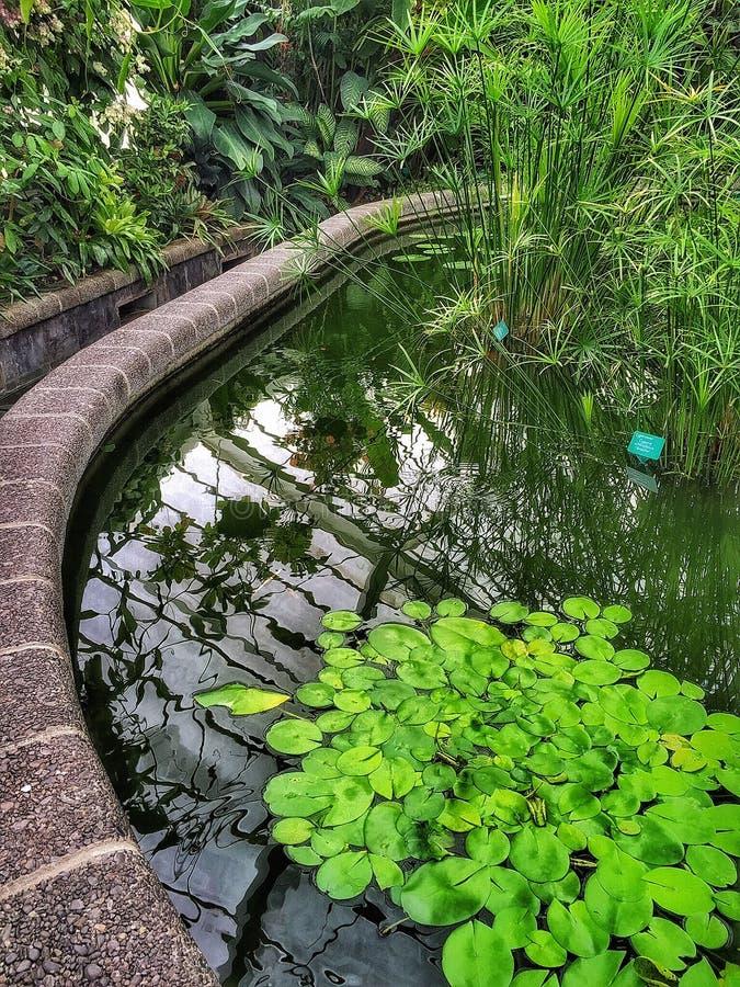 Lagoa do lírio de água em jardins botânicos de Wellington com reflexões imagens de stock royalty free