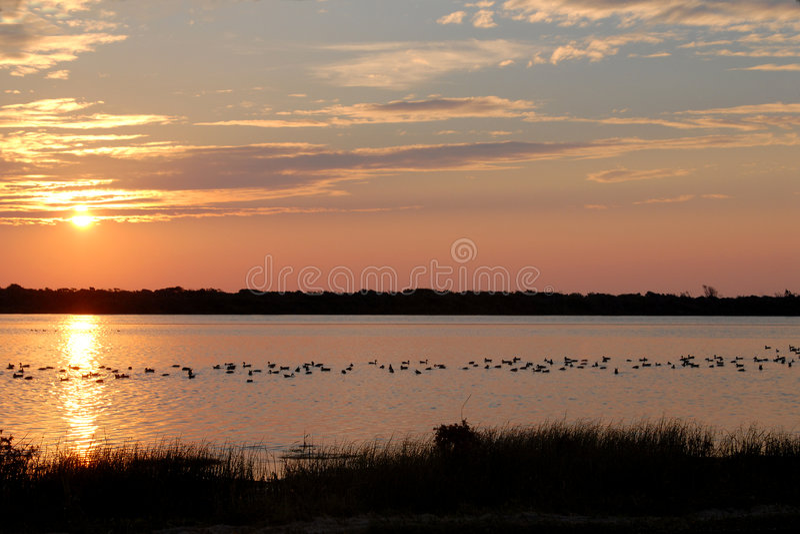Lagoa do pato foto de stock