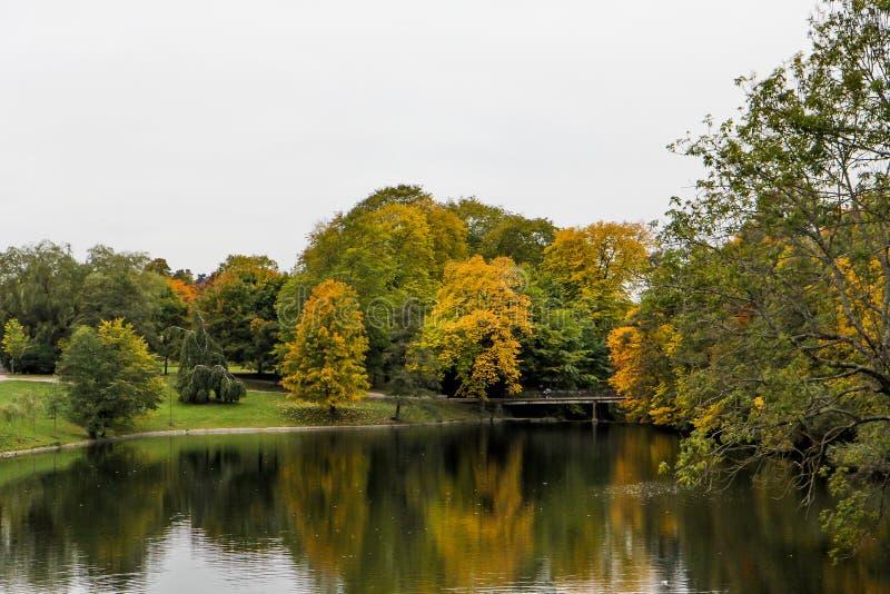 Lagoa e floresta imagem de stock