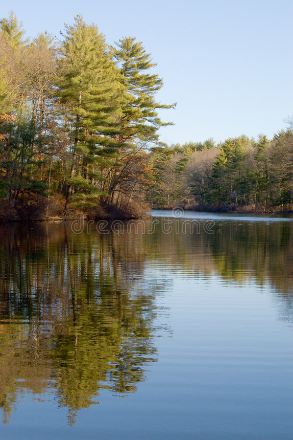 Lagoa e floresta imagens de stock royalty free