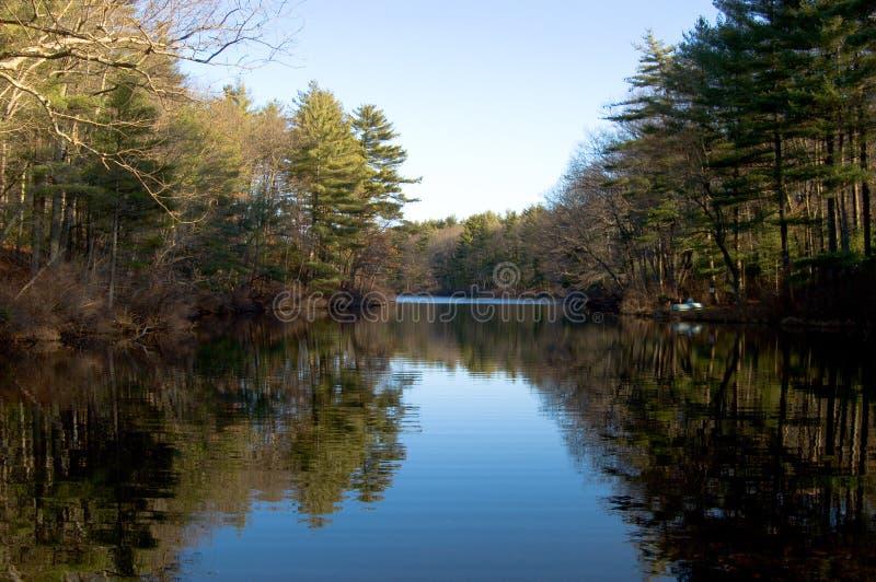 Lagoa e floresta fotos de stock royalty free