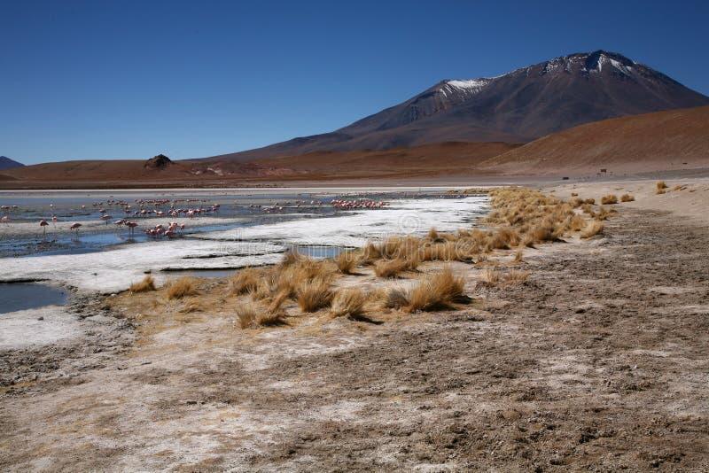 Lagoa em Bolívia foto de stock