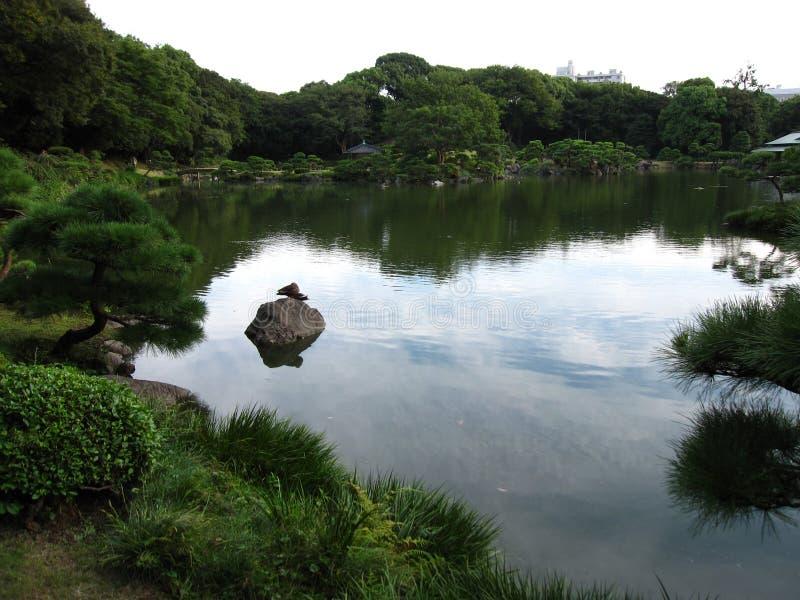 Lagoa em um jardim japonês tradicional fotos de stock royalty free