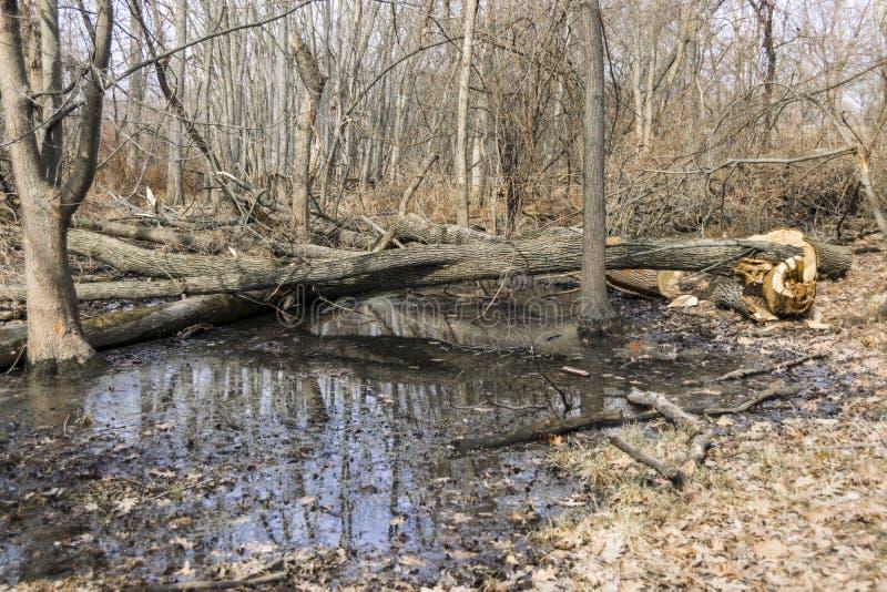 Lagoa em um parque fotografia de stock