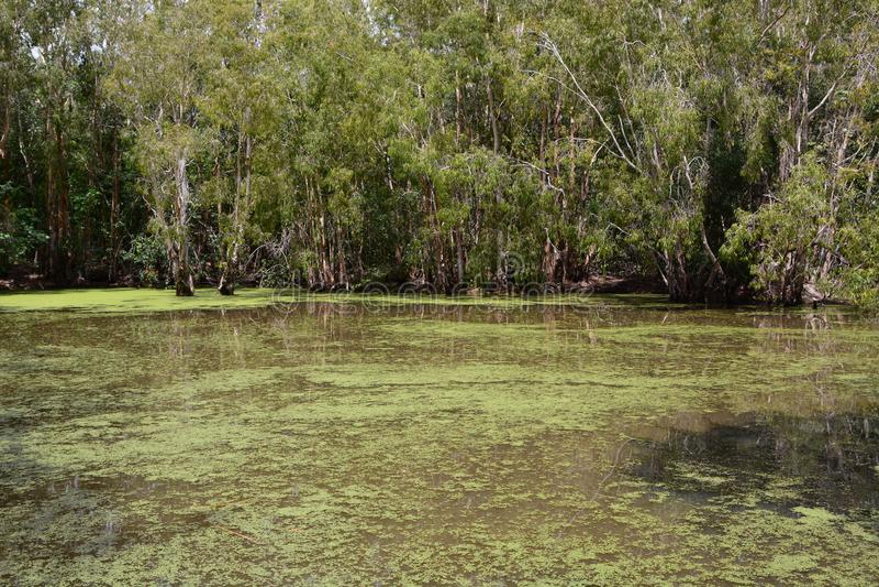 A lagoa Explora??o agr?cola do crocodilo de Hartley Wangetti Condado de Douglas queensland austr?lia foto de stock royalty free
