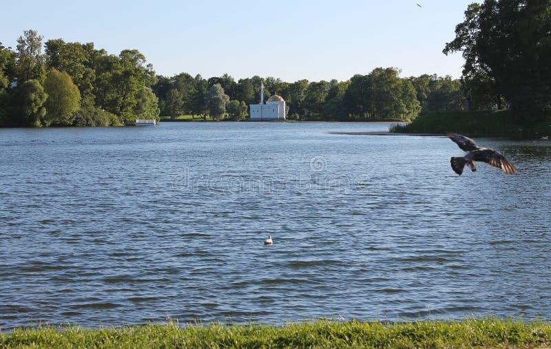 lagoa grande Parque de Catherine Cidade de Pushkin fotografia de stock royalty free