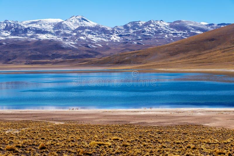 Lagoa Miscanti, elevação nas montanhas de Andes no deserto de Atacama, o Chile do norte do lago, Ámérica do Sul fotos de stock