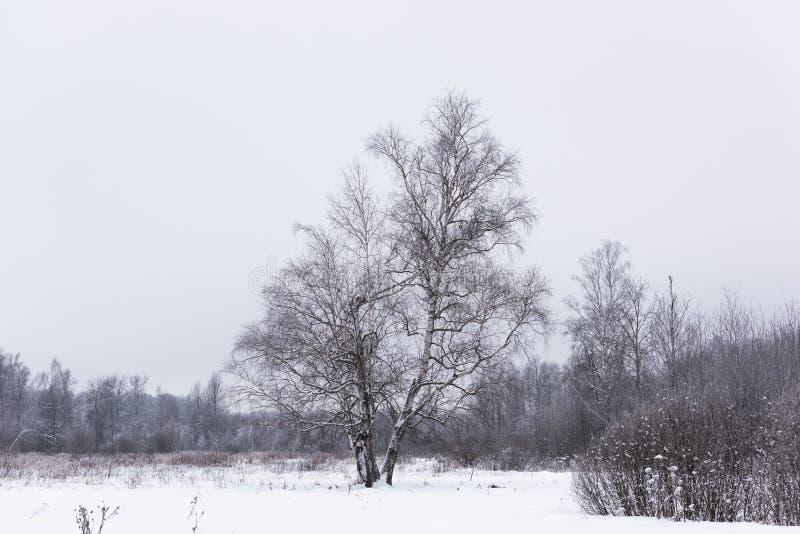Lagoa não congelada no inverno imagem de stock