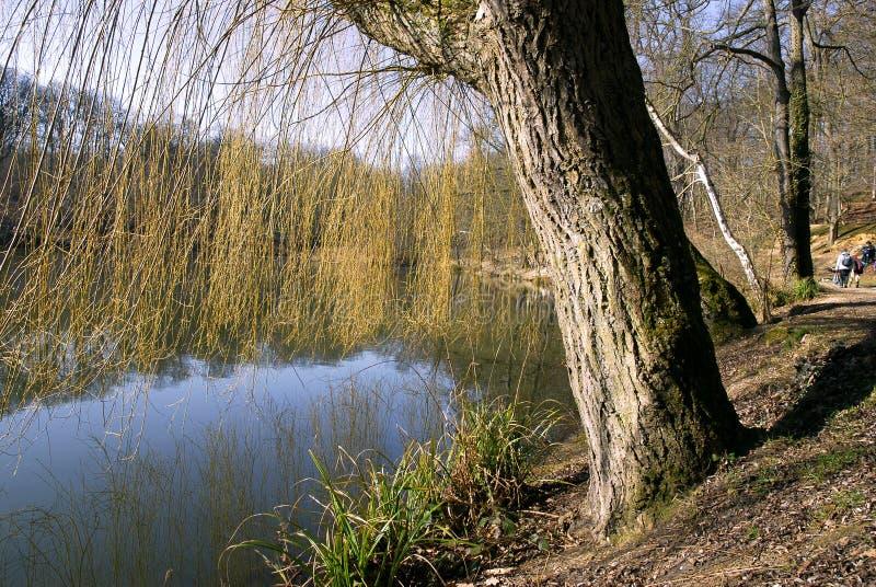 Lagoa na floresta fotografia de stock