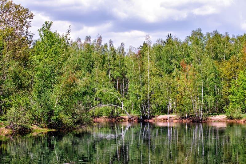 Lagoa na floresta foto de stock royalty free