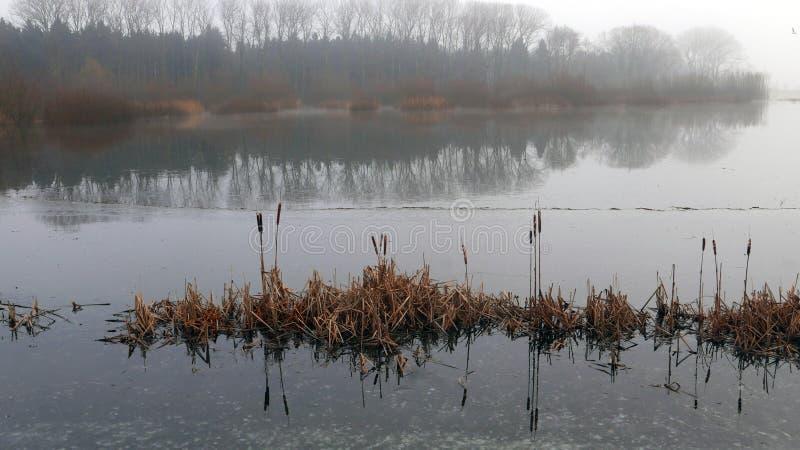 Lagoa na manhã enevoada imagem de stock royalty free