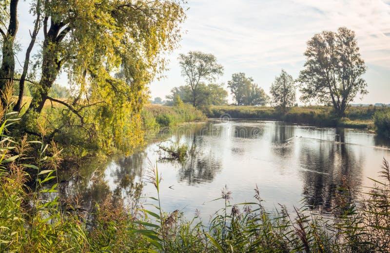 Lagoa natural pequena cedo na manhã fotografia de stock