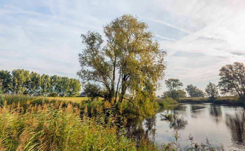 Lagoa natural pequena cedo na manhã fotografia de stock royalty free