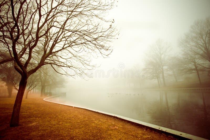 Lagoa nevoenta fotos de stock royalty free