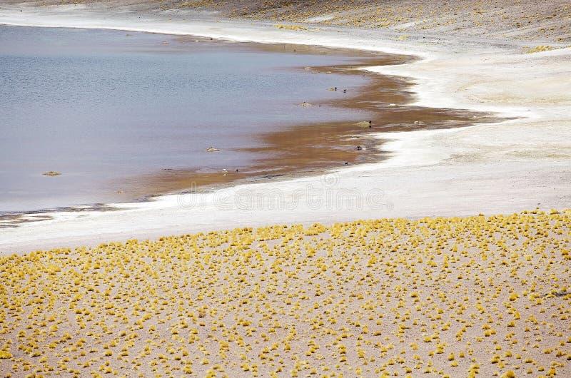Lagoa no deserto de Atacama, o Chile de Miniques fotos de stock royalty free