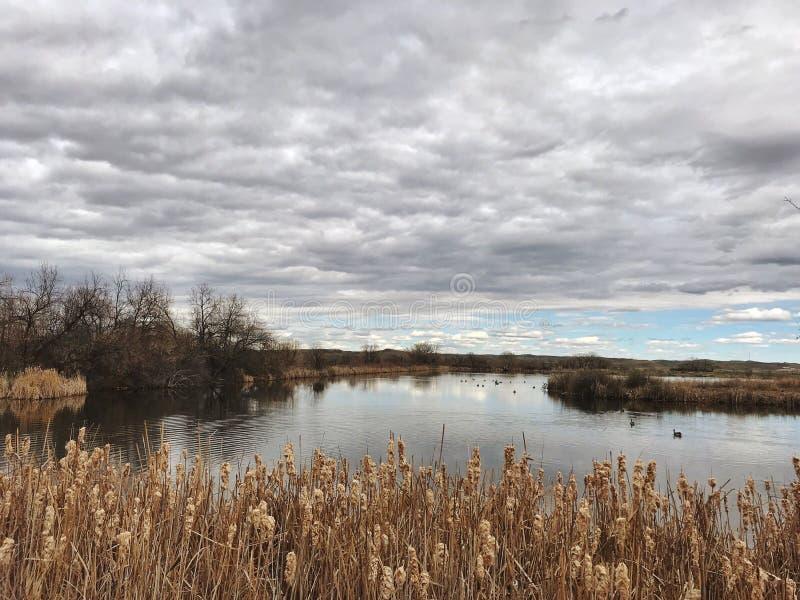 Lagoa no inverno atrasado imagem de stock royalty free