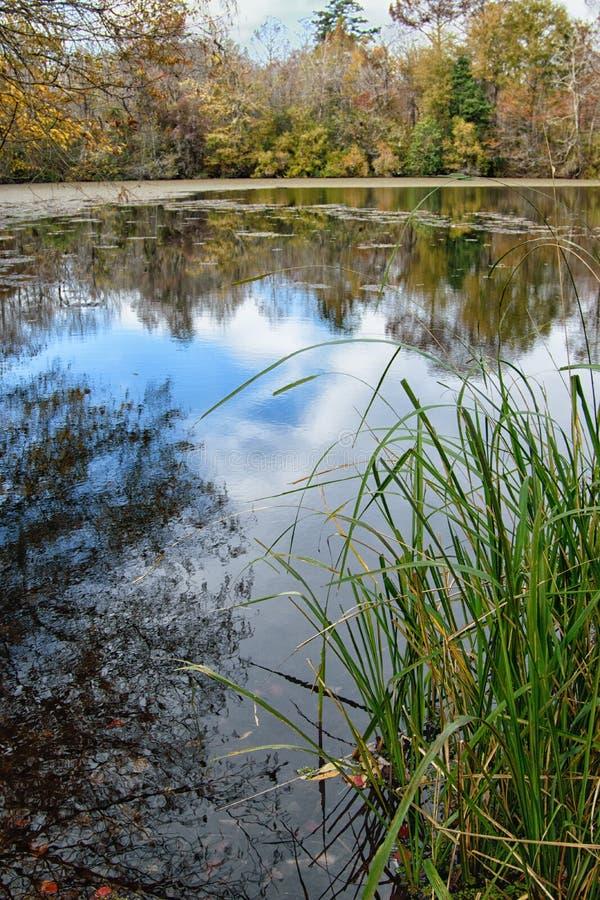Lagoa no parque estadual de Chitto da boga, Louisiana imagem de stock royalty free