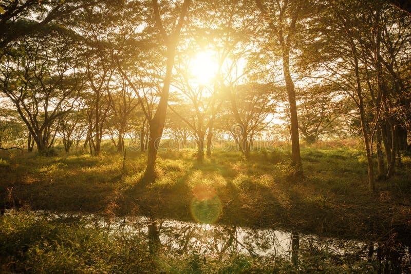 Lagoa o profundo - floresta verde e por do sol, nascer do sol Fundo natural fotos de stock