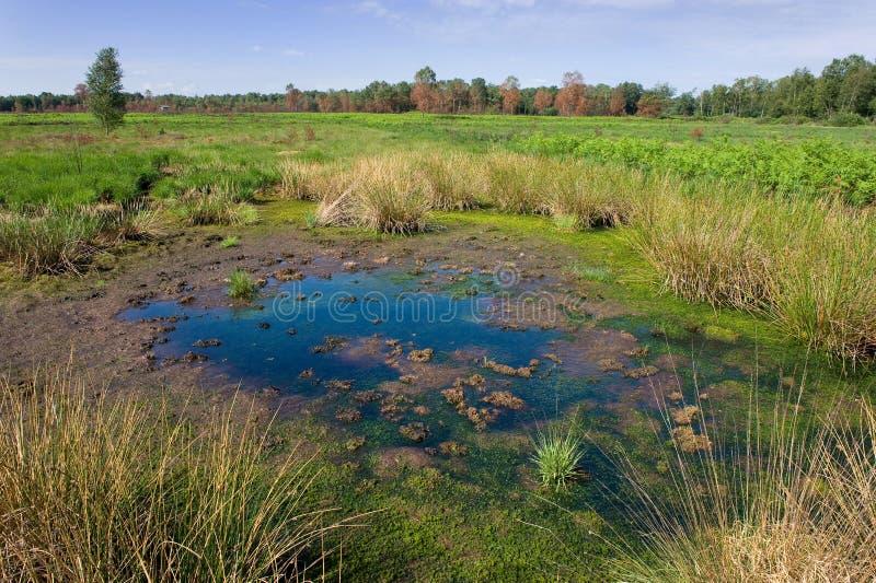 Lagoa pequena imagem de stock