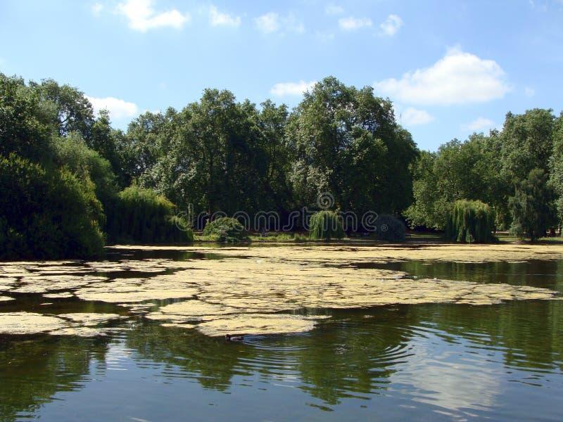 Lagoa pequena no parque fotos de stock royalty free