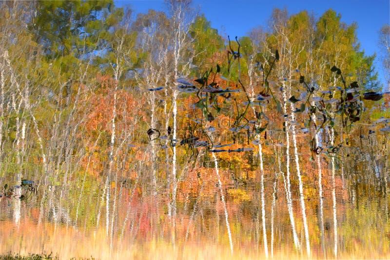 Lagoa, pintada no outono fotos de stock