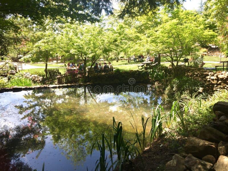 Lagoa reflexiva fotos de stock royalty free