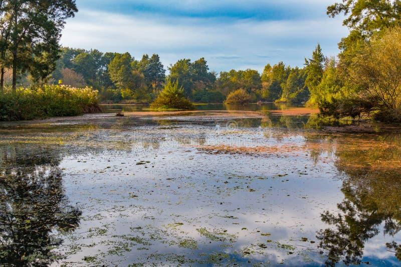 Lagoa Relfections foto de stock