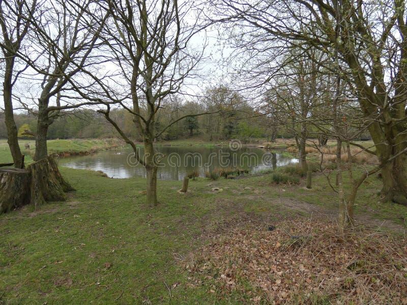 Lagoa secreta profundamente na floresta 2 Uma po?a que aproxima??es amig?veis na primavera foto de stock