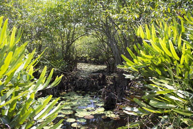 Lagoa selvagem imagens de stock