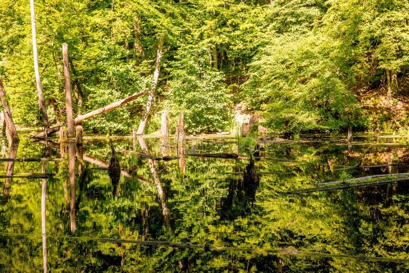 Lagoa superior, Kytayiv, Kiev fotografia de stock royalty free