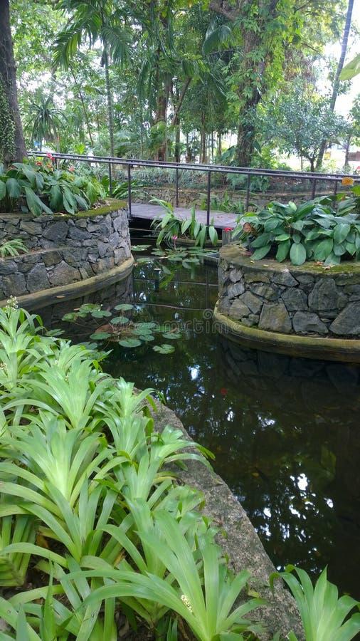 Lagoa verde imagem de stock