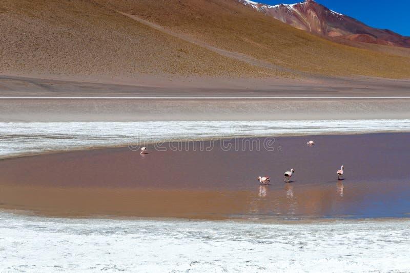 Lagoa vermelha colorida de Altiplanic, um lago salino raso no sudoeste do Altiplano de Bolívia fotografia de stock royalty free
