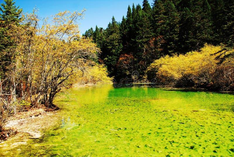 Lagoas calcificadas de Huanglong imagem de stock