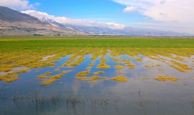 Lagoas de Ammiq fotografia de stock royalty free