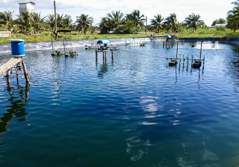 Lagoas do camarão fotos de stock royalty free