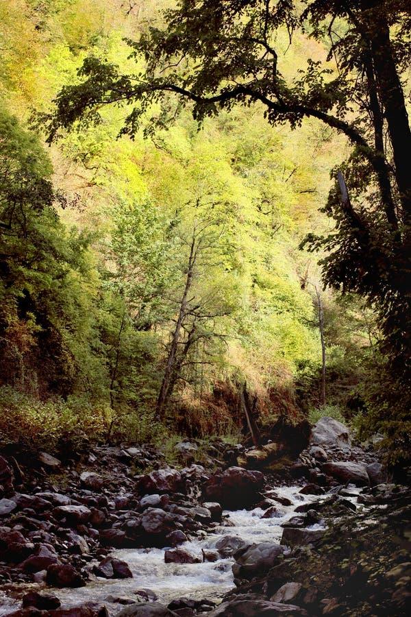 Free Lagodekhi National Park (Georgia) Stock Photo - 52744530