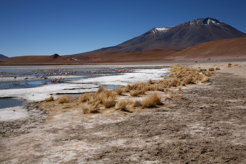 Lagoon in Bolivia. Laguna with flamingos in nature reserve of Eduardo Avaroa, Bolivia stock photo