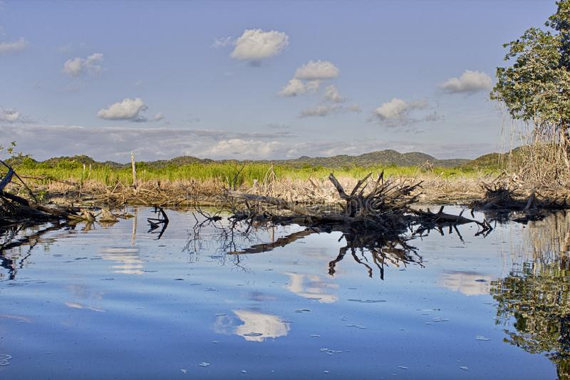 Lagoon, between mangrove and water mirrors, La Ventanilla, small town on the beach, Oaxaca, Mexico. Altitude, background, beautiful, beauty, boardwalk, bridge royalty free stock photo
