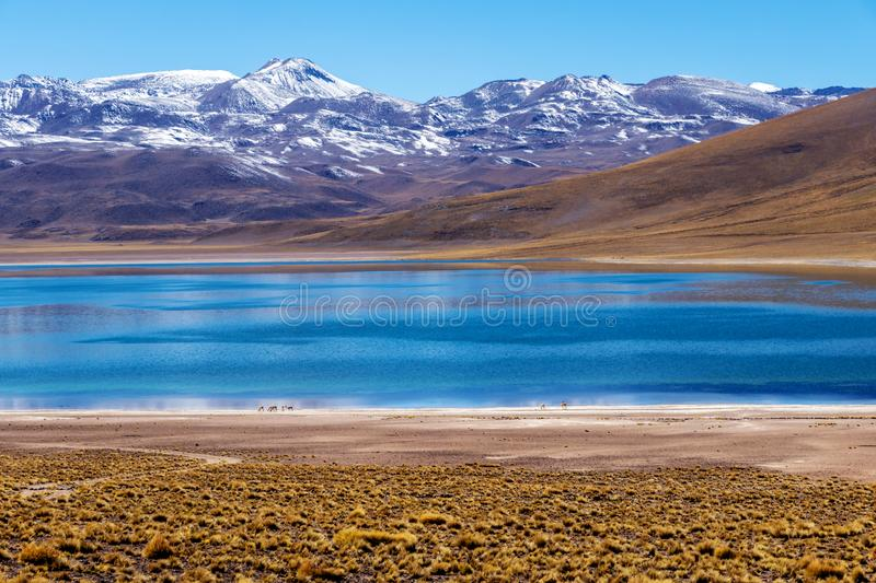 Lagoon Miscanti, lake high in the Andes Mountains in the Atacama Desert, northern Chile, South America stock photos