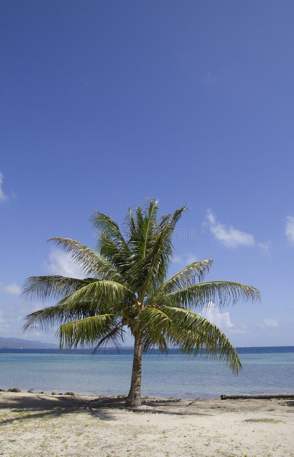 Lagoon Palm Tree Stock Images