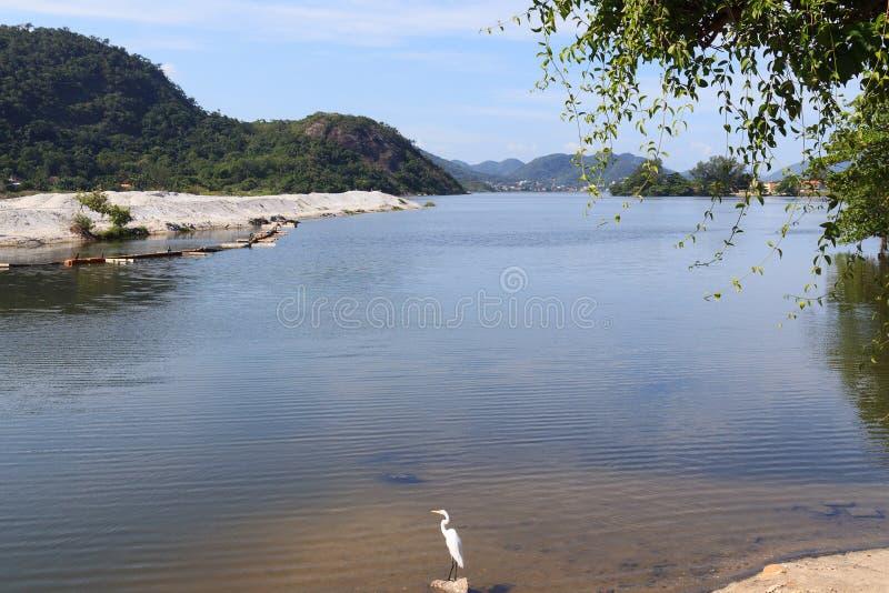 Lagoon Piratininga White Great Egret Niteroi. Brazil royalty free stock photography