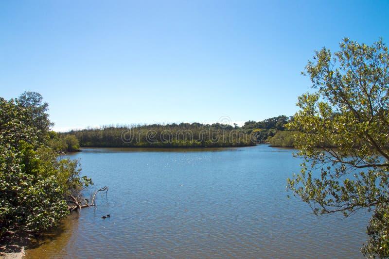 Lagoon at Umlalazi Nature Reserve at Mtunzini South Africa. Morning coastal landscape view of wetland vegetation and lagoon against blue cloudy sky at Umlalazi stock images