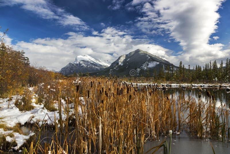 Lagos bermellones Marsh Wetland y montañas rocosas canadienses del parque nacional de Rundle Banff del soporte foto de archivo