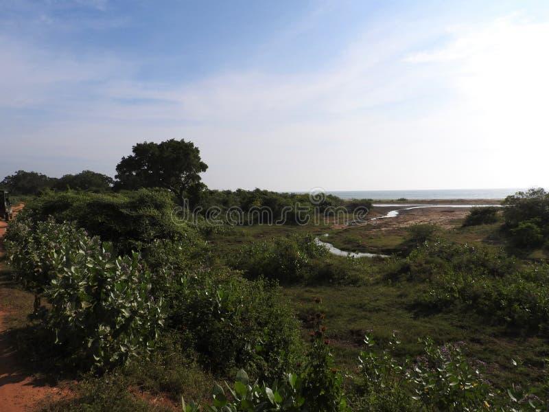 Lagos, p?jaros, naturaleza y paisaje en el parque nacional de Yala, Sri Lanka foto de archivo