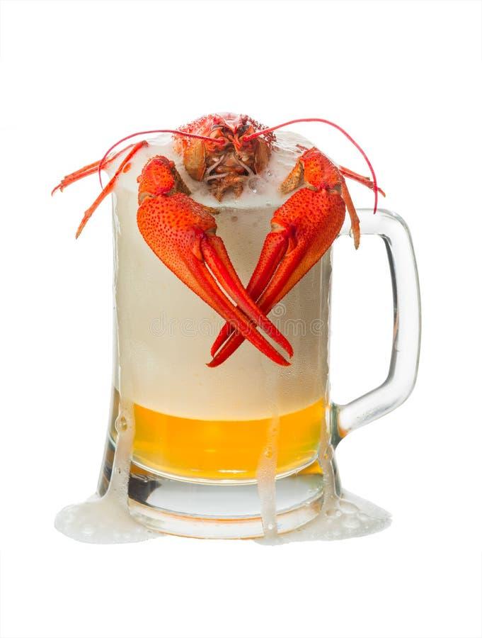 Lagosta com cerveja fotografia de stock